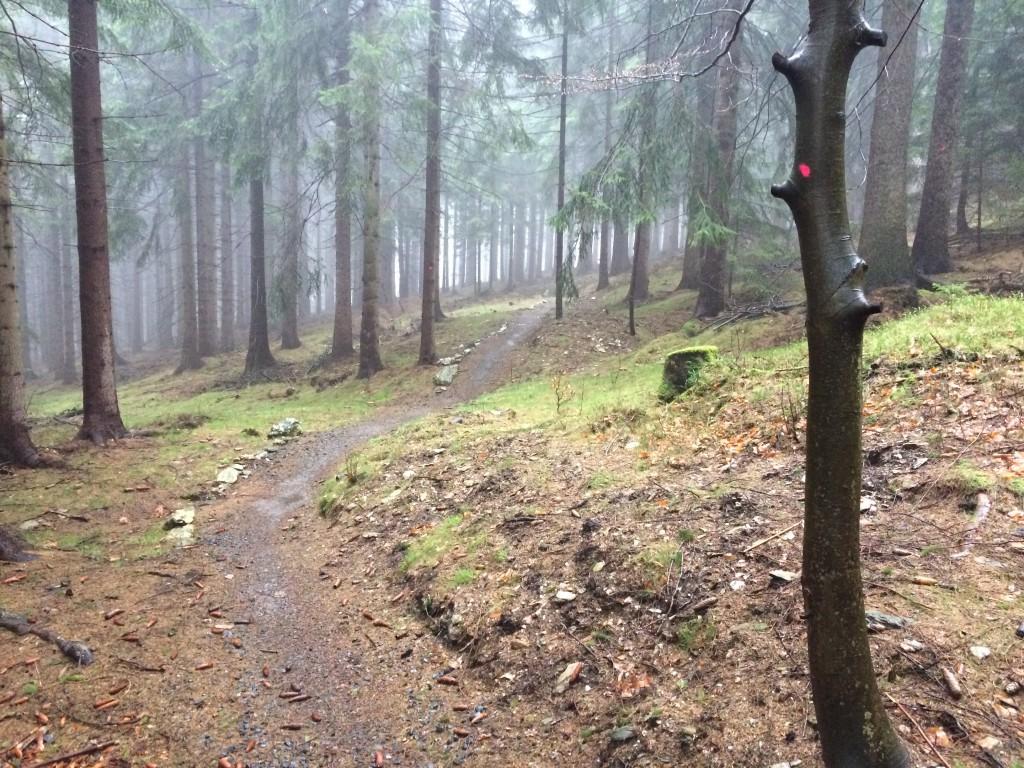 alpenradler - Singltrek pod Smrkem
